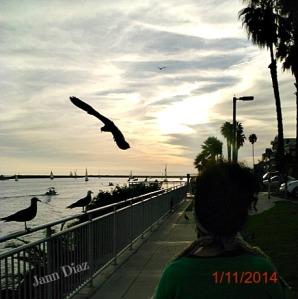 Marina del Rey 1112014