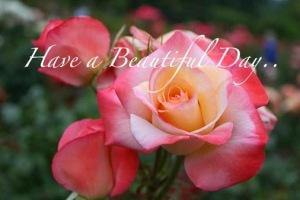 beautiful day!!