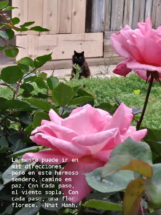 una flor florece...cat